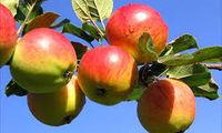 Weston's Orchard & Machinery Day