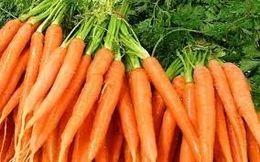 BCGA Carrot Variety Demo & Exhbition -