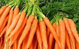 BCGA Carrot Variety Demo & Exhibition - Carrots