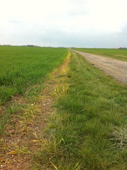 No margin of error when using Micron's Enviromist sprayers - Field margin post-treatment