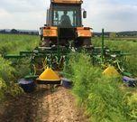 Varidome S3 in asparagus