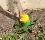 Weedstick+ photo 1308