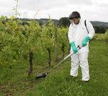Herbiflex 4 in vines