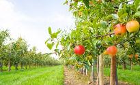Horticulture & Fruit