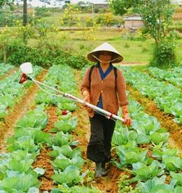 CDA And The Small Farmer - Vietnamese Lady spraying her cabbages