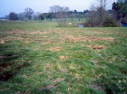 Safe application solution for weeds with a difference -